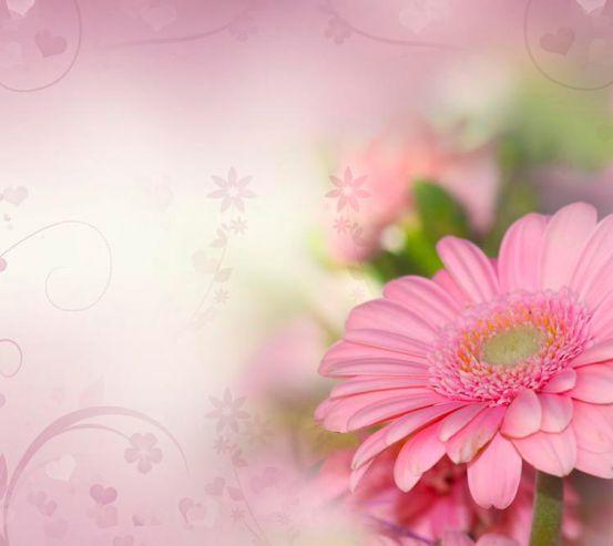 Фотообои Герберы розовые 12508