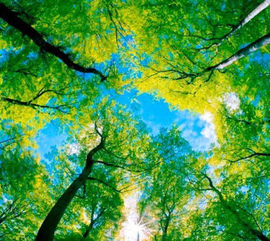 Фотообои Верхушки деревьев  7047