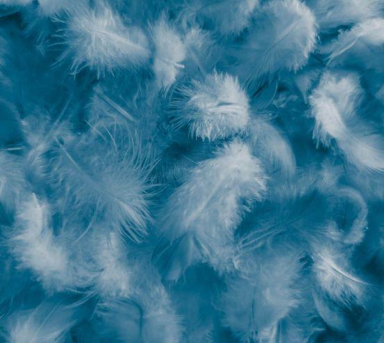 Фотообои Синие пёрышки 25606