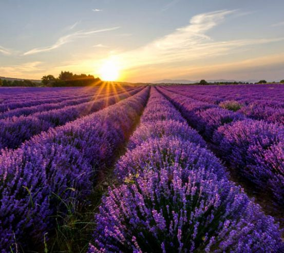 Фотообои цветы в поле 27052