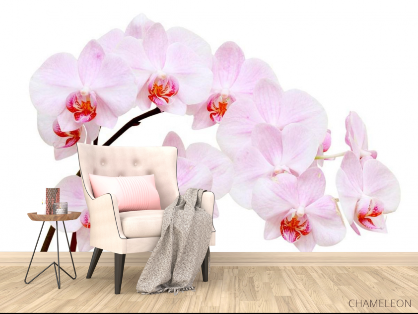 Фотообои Белоснежные цветы орхидеи - 4