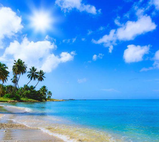 Фотообои Море и пальмы 23470