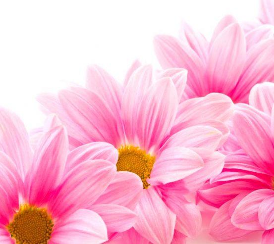 Фотообои Ромашки розовые 4399