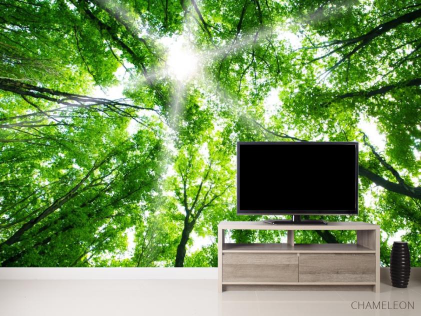 Фотообои свет свозь кроны деревьев - 2