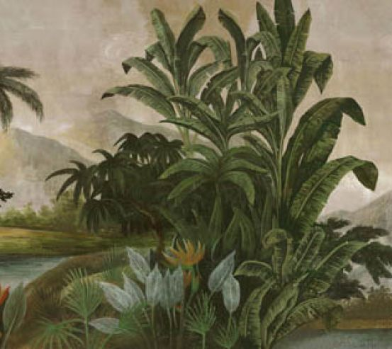 Фотообои Тропические растения 23066