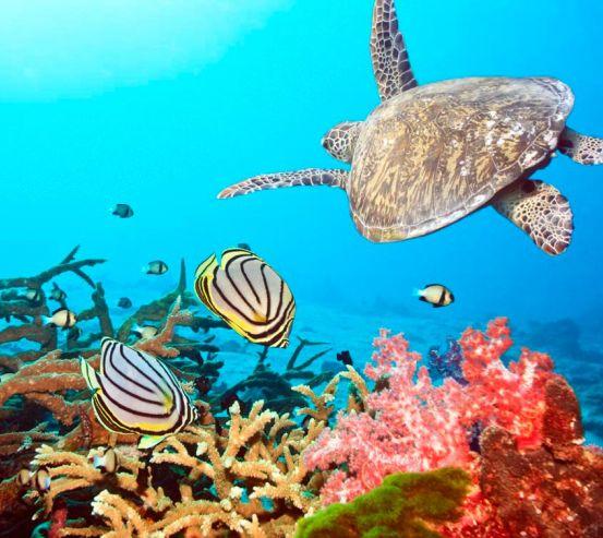 Фотообои Черепашка и рыбки 0522