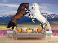 Фотообои белая и черная лошадь - 1