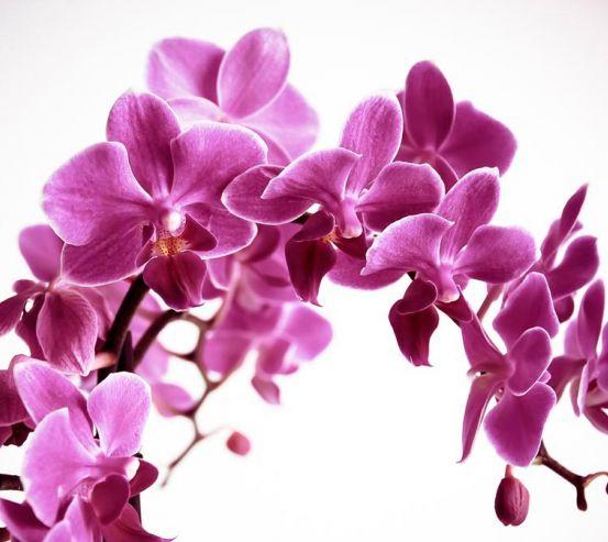 Фотообои Орхидея 13974