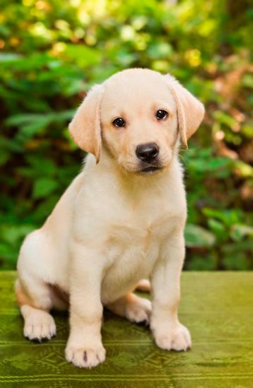 Фотообои Милый щенок
