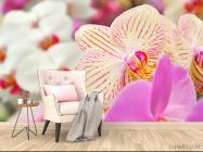 Фотообои Орхидеи в крапинку  - 4
