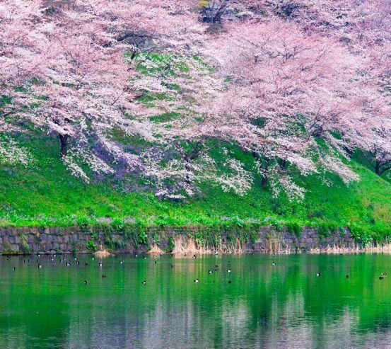 Фотообои Цветы над водой 1588