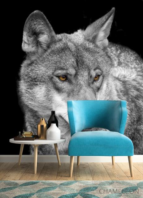 Фотообои белый волк - 4