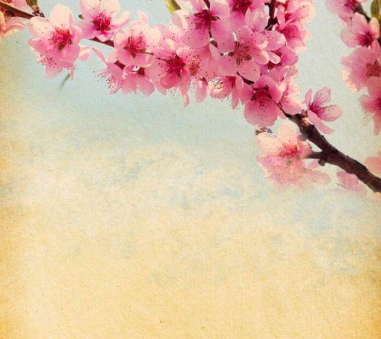 Фотообои Веточка вишневых цветов 5494