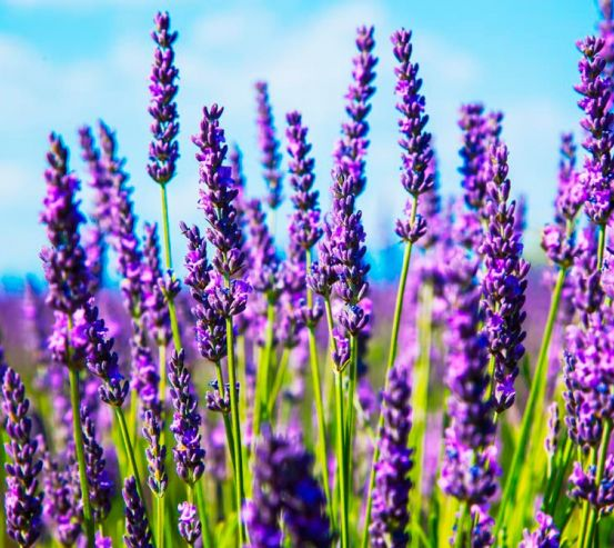 Фотообои Цветы 13649