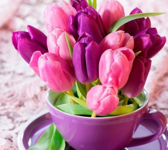Фотообои Тюльпаны 13686