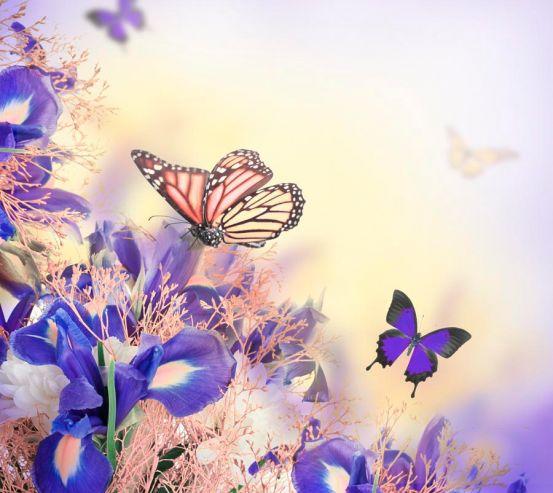 Фотообои Бабчки на цветах 13799