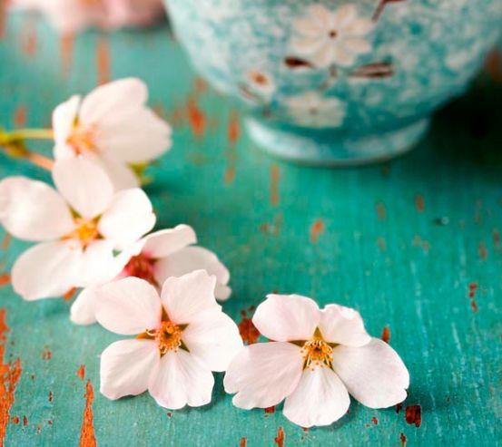 Фотообои Цветы абрикоса в пиалке 3997