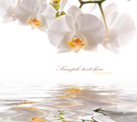 Фотообои Орхидеи белоснежные 7399