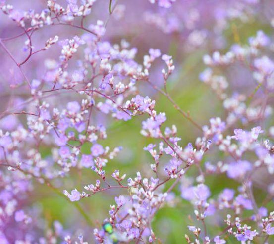 Фотообои полевые цветы 26036