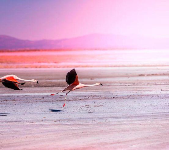 Фотообои Два фламинго 12592