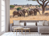 Фотообои слоны и слонята - 3