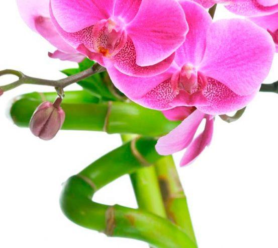 Фотообои Орхидея и бамбук 9015