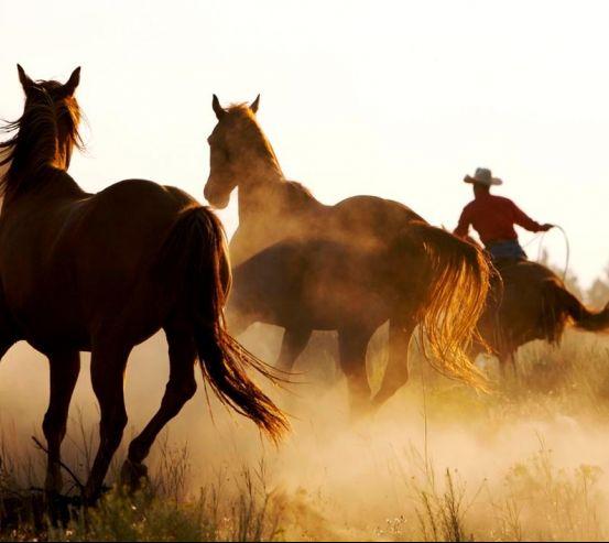 Фотообои Лошади в поле 3430