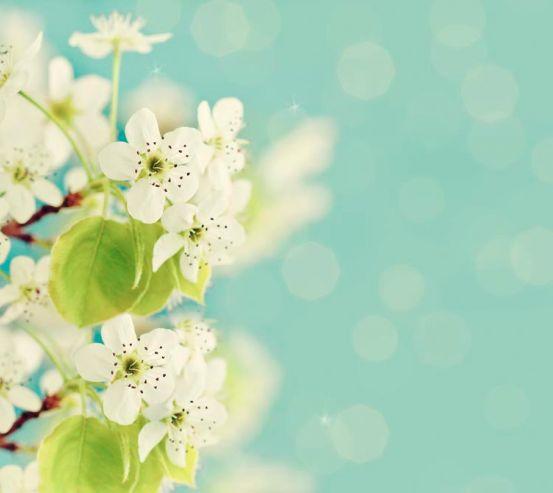 Фотообои Беленькие абрикосовые цветы 5493