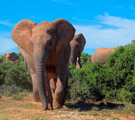 Фотообои Стадо слонов 10683