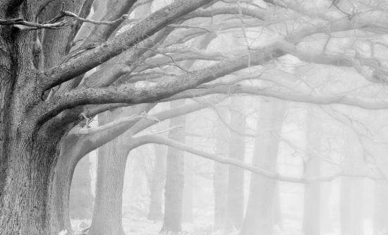 Фотообои большие серые деревья