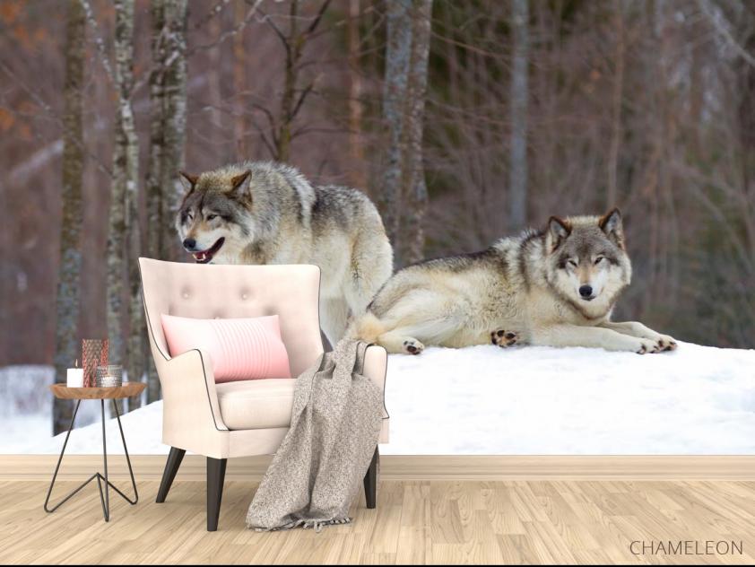 Фотообои два волка на снегу - 4