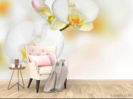 Фотообои Орхидеи белые с желтым - 4