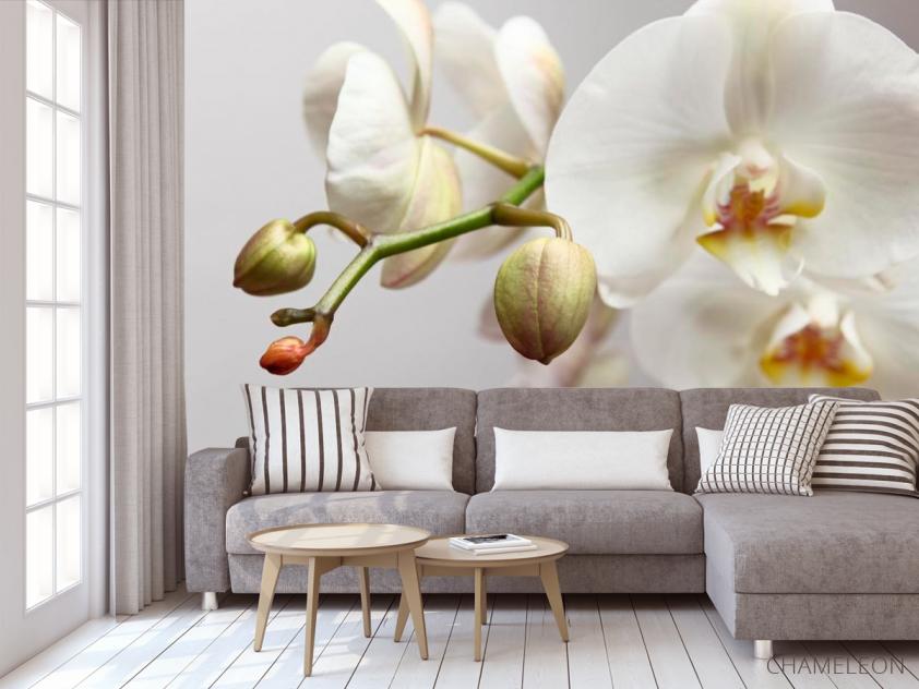Фотообои Орхидея белоснежная - 3