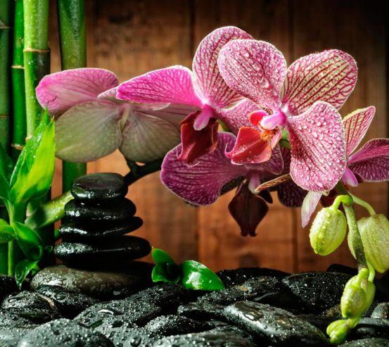 Фотообои Малиновые полосчатые орхидеи 8675