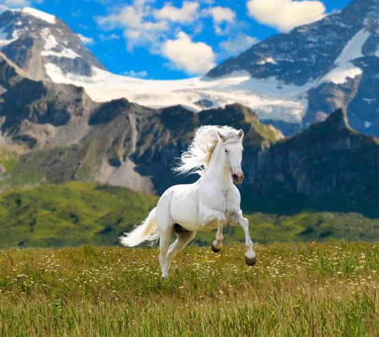 Фотообои Конь в поле 4551