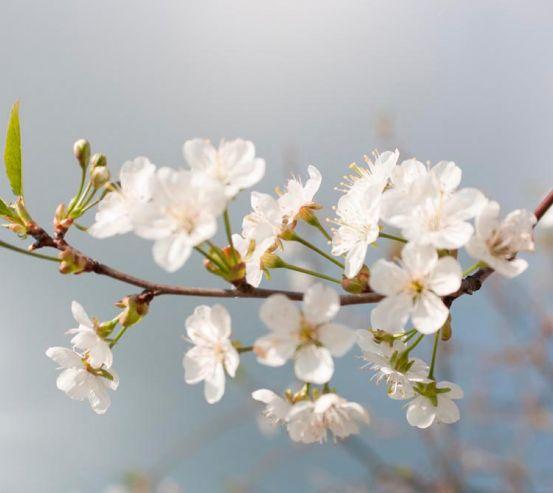 Фотообои Мелкие белые цветочки 4158