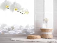 Фотообои Орхидеи белые - 2