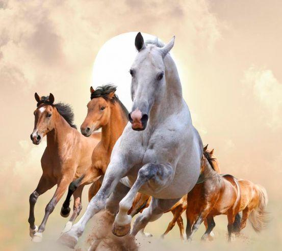 Фотообои Скачки лошадей 10899
