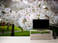 Фотообои Абрикосовые маленькие цветочки - 2