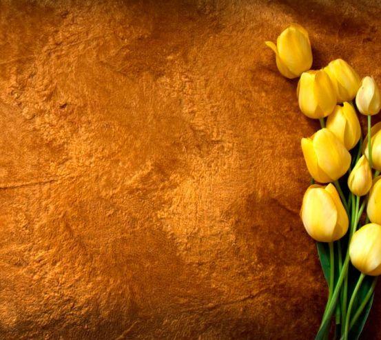Фотообои Желтые тюльпаны 7585