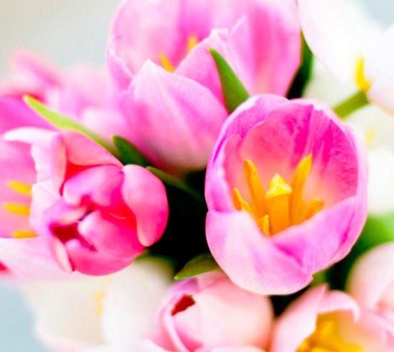 Фотообои Тюльпаны розовых тонов 9110
