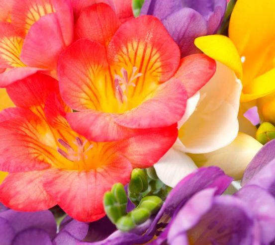 Фотообои Закругленные тюльпаны 5891