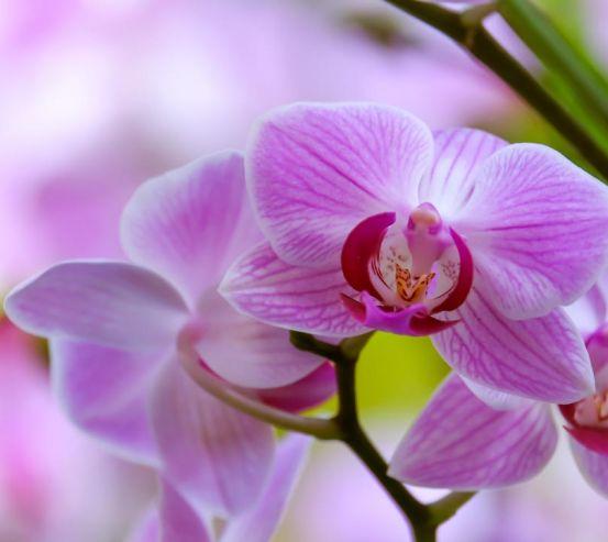 Фотообои орхидеи с листиком 21424