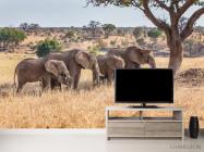 Фотообои слоны и слонята - 2