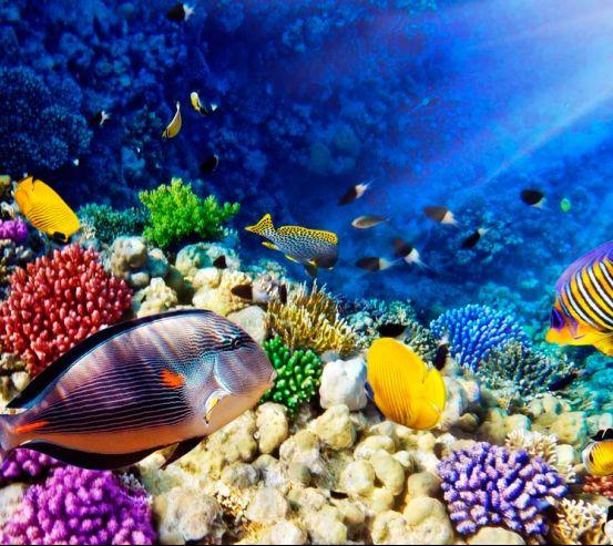 Фотообои Рыбы в глубине 10430