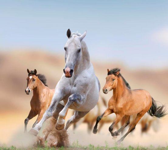Фотообои Игры лошадей 10900