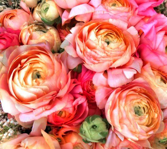 Фотообои Пионы насыщенно розовые 10949
