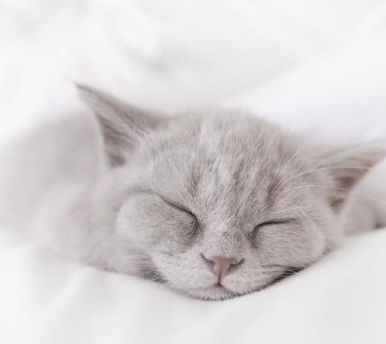 Фотообои серый котёнок спит 20879