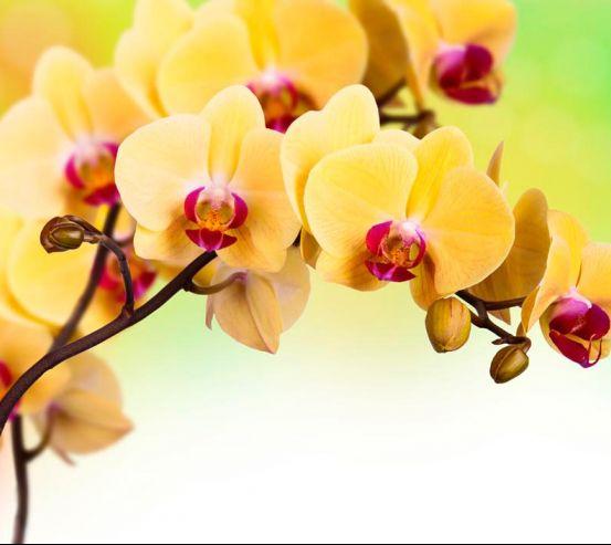 Фотообои Желтая орхидея 16840