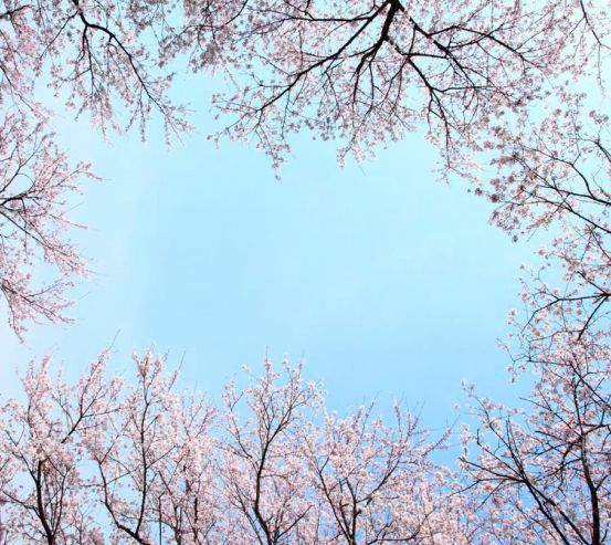 Фотообои Верхушки деревьев, цвет  10276